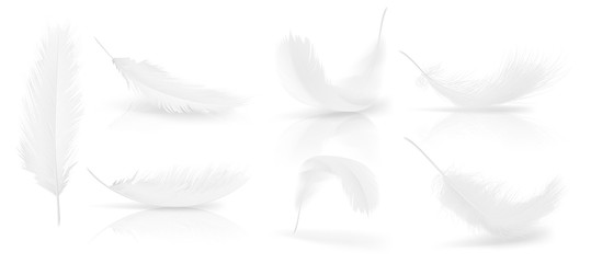 Vector realistic 3d set of white bird or angel feathers in various shapes, isolated on background. Symbol of lightness, innocence, heaven, literature and poetry. Decoration element for your design