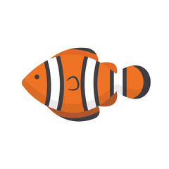 Orange clown fish isolated on white background. Vector stock.