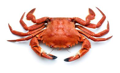 Tuinposter Schaaldieren atlantic necora crab isolated