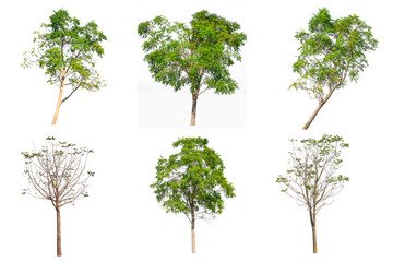 Tree collection set isolated on white background.