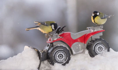 two great tit with Quadbike and snowplough