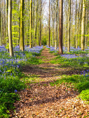 A straight path leading through a vibrant blue and purple carpet