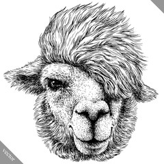 black and white engrave isolated Lama vector illustration