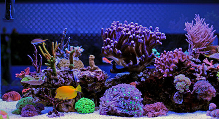 Poster Coral reefs Coral reef aquarium tank scenic moment