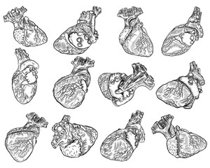 Set of anatomical hearts from different view on white background. Hand drawn illustrations concept of flesh tattoo. Vector.