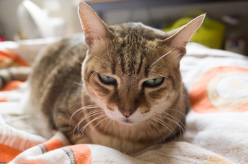 unhappy fat cat