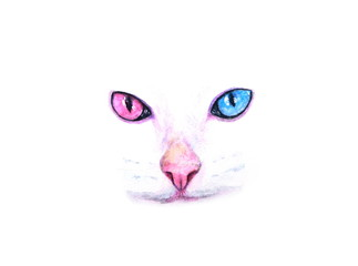 watercolor cat face two-color eyes portrait on white background