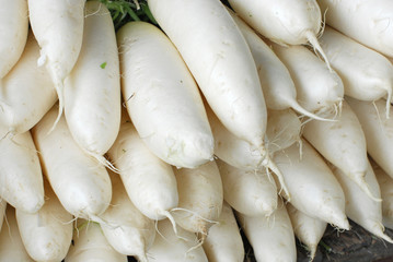 Close up on white radish in pile