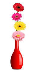 Bouquet of colorful gerberas in red vase isolated on a white background.