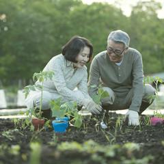 農作業をするシニア夫婦