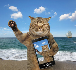The cat with a smartphone is on a beach.