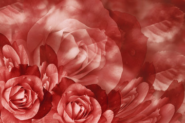 Floral  red beautiful background.  Flower composition  of  roses  flowers.  Close-up.  Nature.
