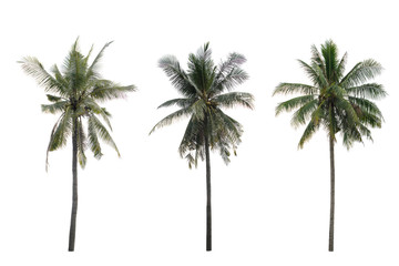 collection coconut tree isolated isolated on white background