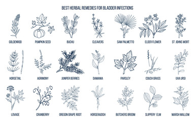 Best herbal remedies for bladder infections