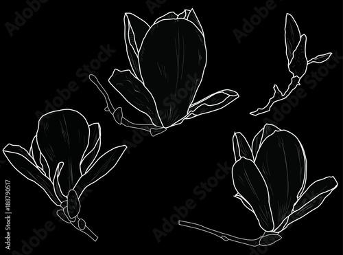 Set Of Four Magnolia Flower Outlines On Black Background Stock