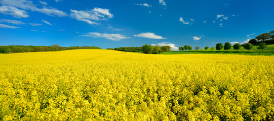 Kulturlandschaft im Frühling, blühendes Rapsfeld, Traktor mit Feldspritze im Hintergrund