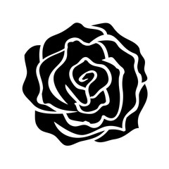 rose isolated illustration on white background