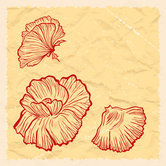 Vintage greeting card background with poppy flowers