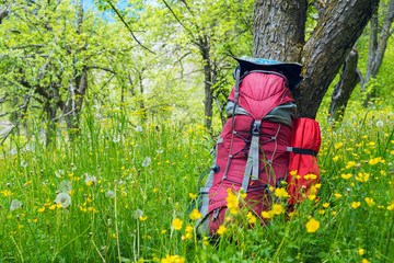 Red backpack stands on the green meadow