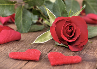 close on red rose with little hearts on a plank