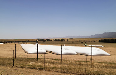 Swartland region of the Western Cape South Africa. December 2017. Long tube like storage plastic bags laying in a field of the wheatlands