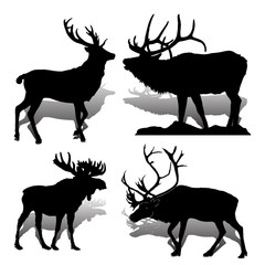 Collection Forest animals (mammals) Deer and moose, on white background,
