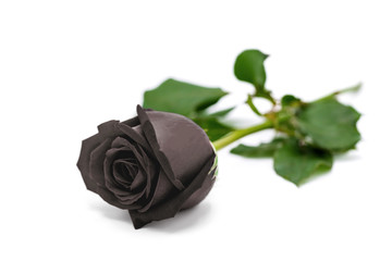 Macro close-up of beautiful black rose on black background for Valentine's Day. Black Valentines Concept.