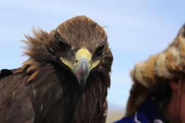 Golden Eagle Festival.