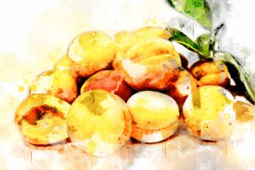 Watercolor Illustration Apricots