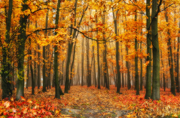 autumn forest. a picturesque foggy morning in an autumn forest