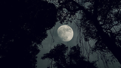 forest dark night with moon
