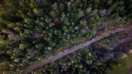 The forest from above