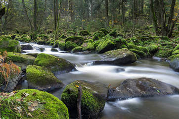 Forest river with rocks