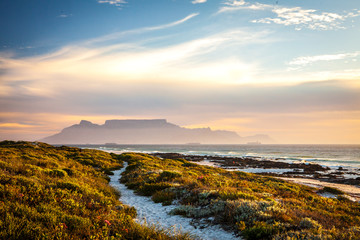 table mountain cape town at sunset with path in  dunes in foreground