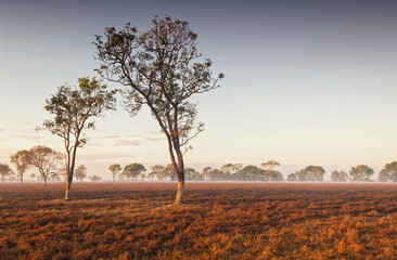 Wall Murals Deep brown Dawn mist in the Australian Outback (Darwin, Northern Territory)