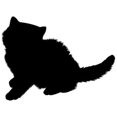 Exotic Shorthair Cat Silhouette Vector Graphics