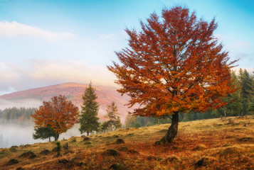 foggy morning. a picturesque autumn dawn in the Carpathian Mountains