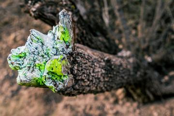 L'étrange couleur de la sève d'un arbre