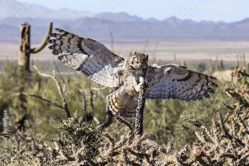 Wall mural Great Horned Owl