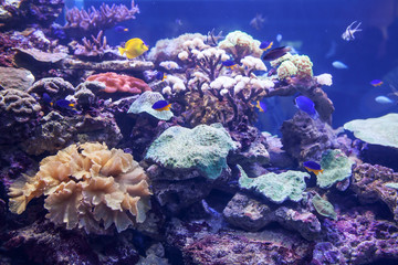 exotic seaworld in aquarium