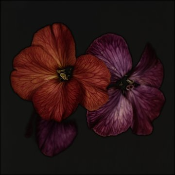 Close up of purple and red flowers