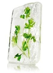 Cilantro frozen in block of ice