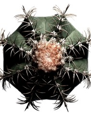 Close-up top view of cactus with needles