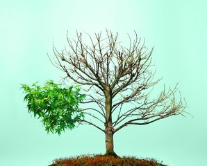 Bonsai tree with leaves and bare branches