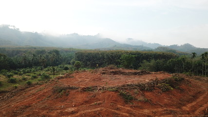 Deforestation. Rainforest destroyed for oil palm plantations. Environmental destruction