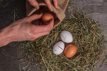 The man hand is raising egg from nest hay.