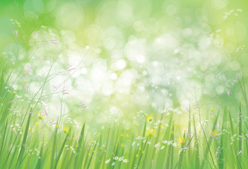 Vector summer,  green,  nature  background, grass and   flowers border on bokeh green background.