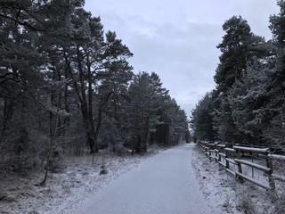 Stadtwald Augsburg im Winter (Bayern)