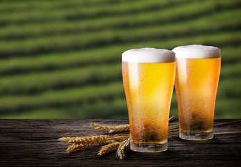 Cold beer with wheat on wooden table. Glasses of light beer with barley and the plantations background.