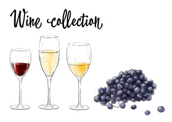 Three glasses of wine and grape cluster isolated on white background. Wine collection. Vector illustration.